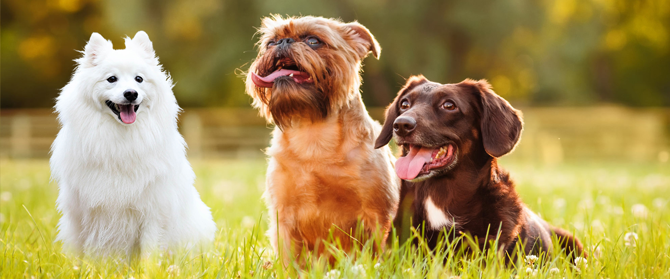 Dog, puppy pet shop, accessories, exporter, boarding, clinic, price,  grooming services in Sec 46 Noida, Gurgaon, Delhi, Ghaziabad, Greater  Noida, India   We Love Pet